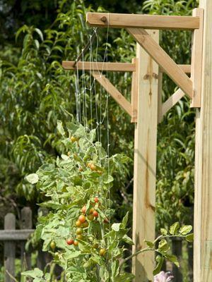 add a Trellis to your garden